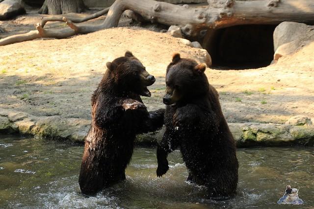 Tierpark Hagenbeck 04.07.2015  209
