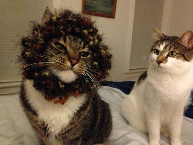 Lion Mane hat