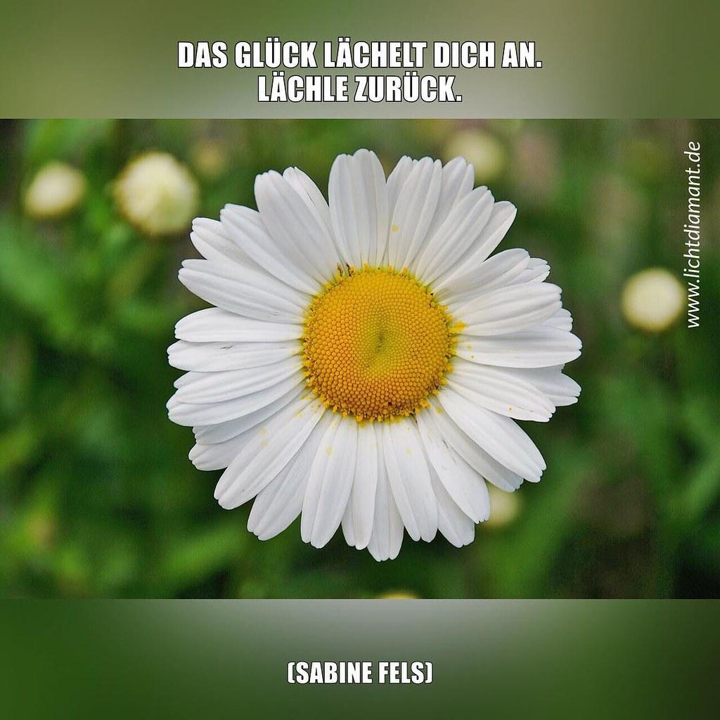 blume #blumen #spiritualität #spirituell #sprüche #heilun… | flickr