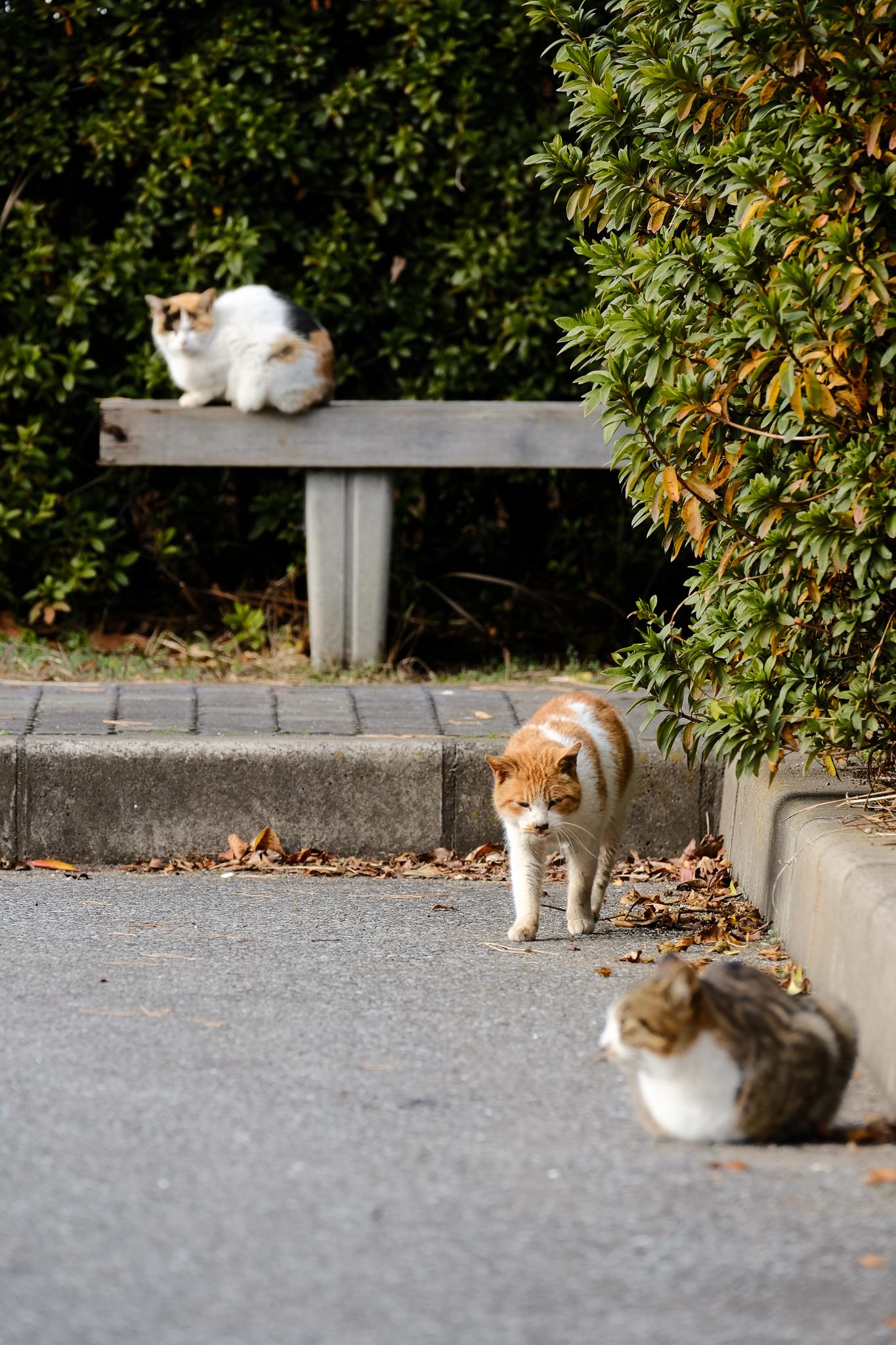 猫-2911.jpg
