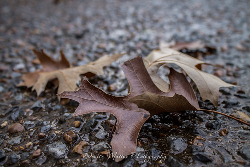 011/365 : Wet leaves