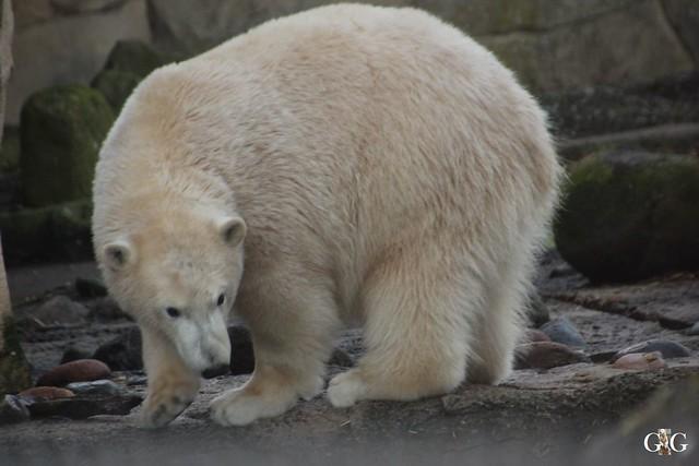 Besuch Zoo am Meer 29.12.201670