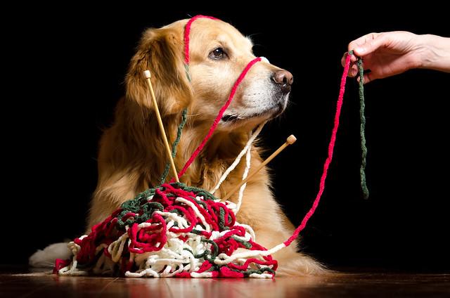 Tangled Dog