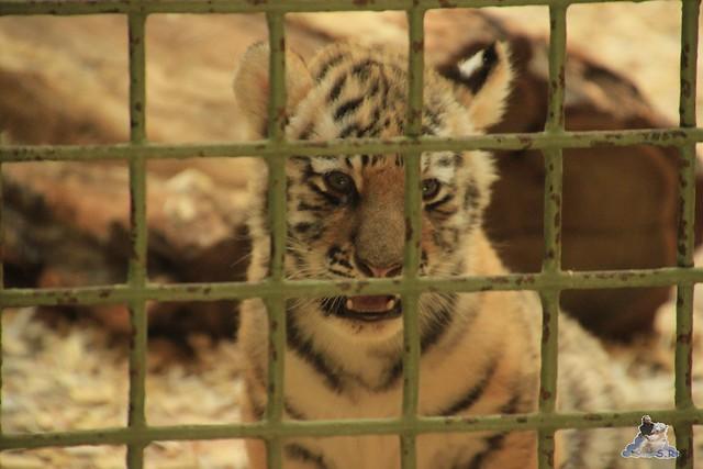 Tierpark Berlin 13.06.2015   144