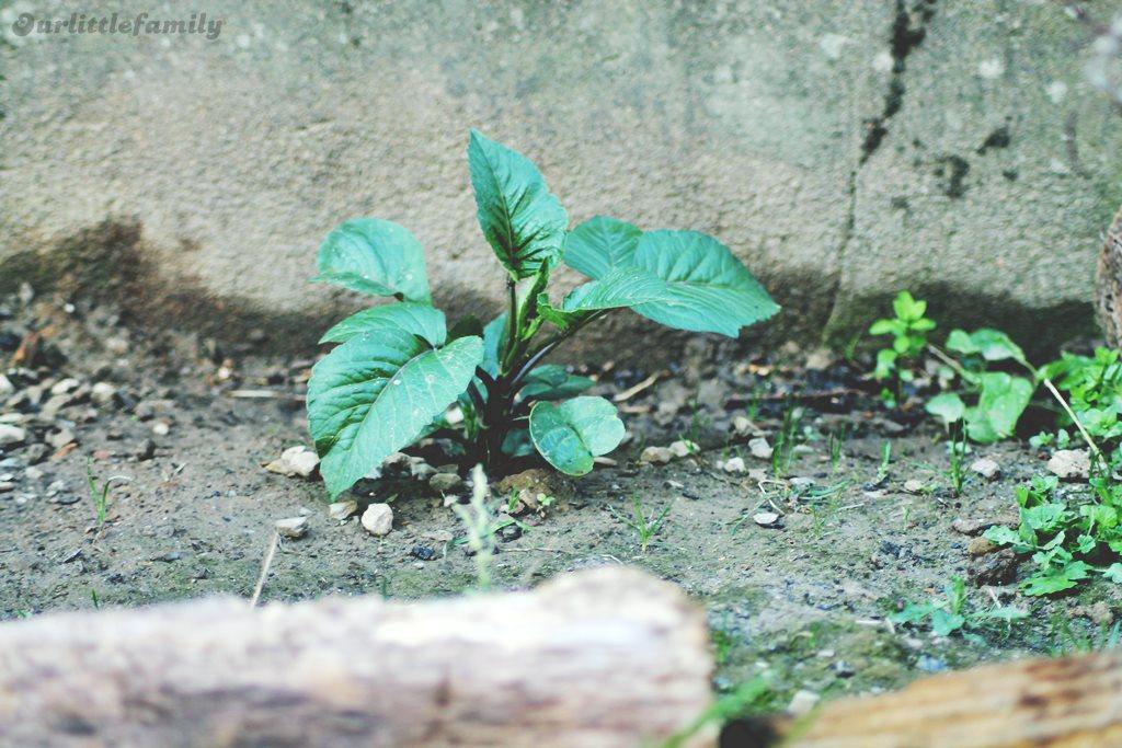 mon jardin 6