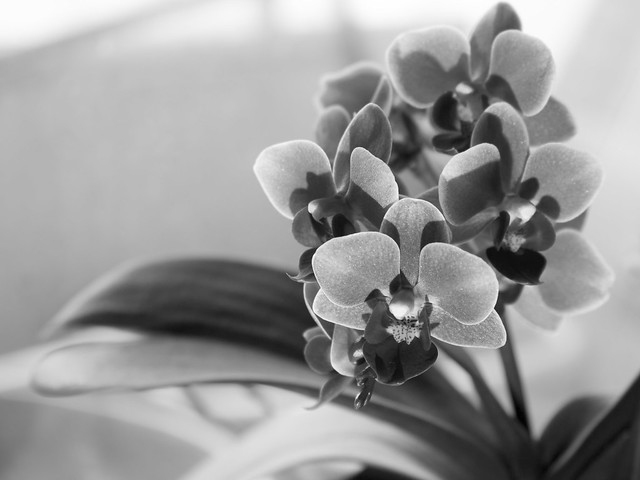 Orchid in winter