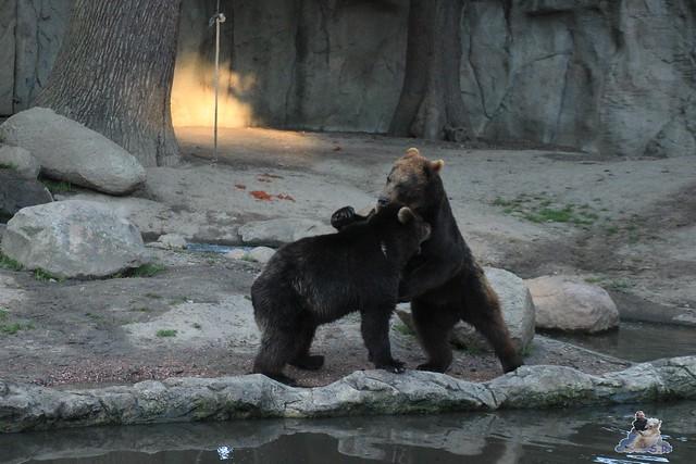 Tierpark Hagenbeck Dschungelnacht 06.05.2015   150