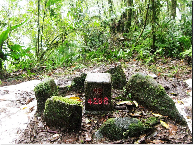 伍伴山三等三角點(# 4286 Elev. 1484 m)