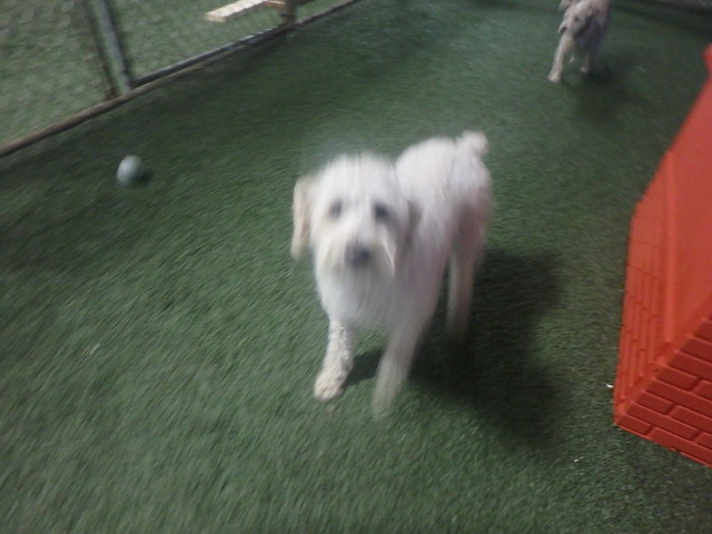01/21/17 Frisbee Catch! :D