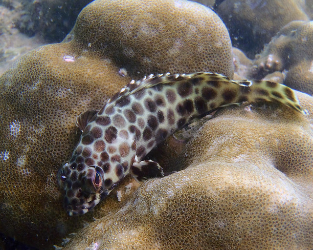 Pececitos del mar de Andamán mientras hacíamos snorkel en las islas Phiphi