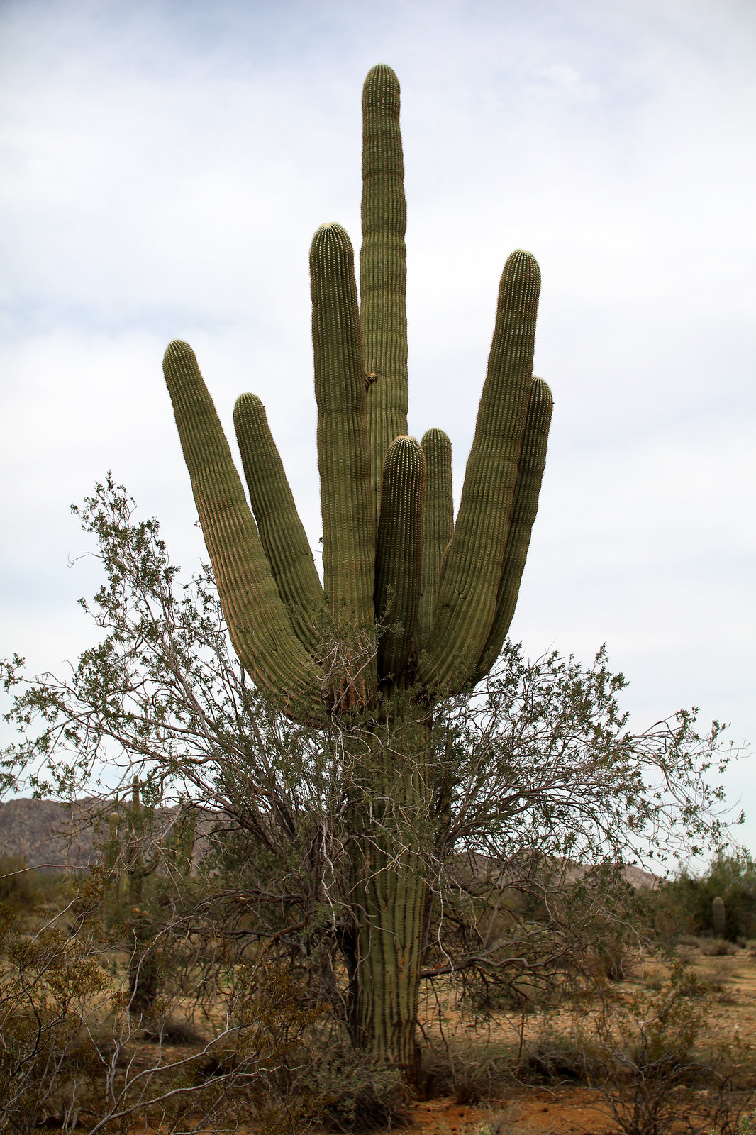 White tank mountain Phoenix Arizona cacti travel blogger USA