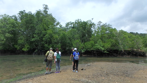 Restore Ubin Mangroves (R.U.M.) Initiative monthly walk, Feb 2017