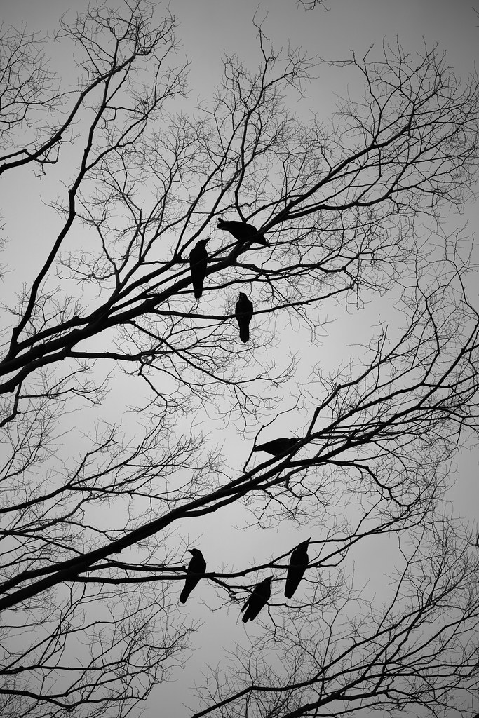 20170209_01_Monochrome Crow