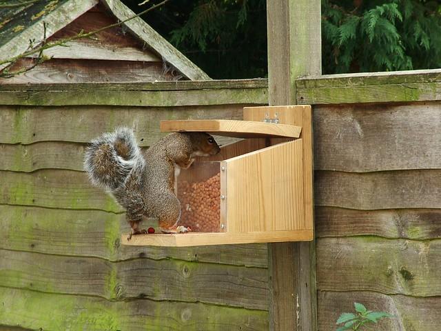 Hog Trough Squirrel Feeder Birds And Feeding Stations