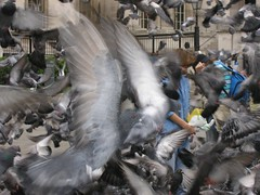 Pigeons in Trafalger Square | by captainadventure