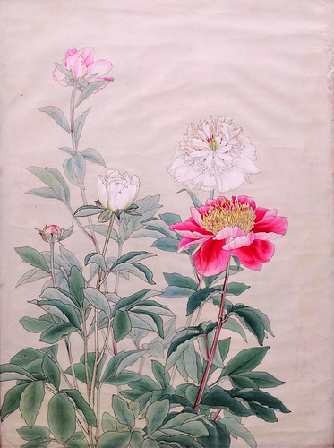 *Peony - 芍薬 | by m-louis