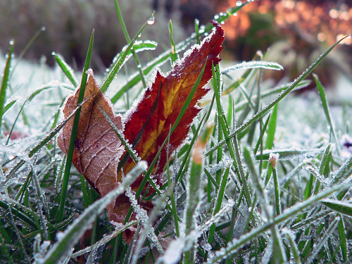 It was frosty today | by Lazy B
