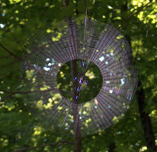 Spider web | by jmknapp