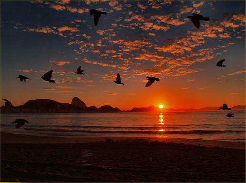 Sunrise Birds Images Birds at Sunrise Capacabana