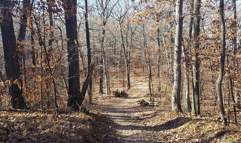 path through the woods, with most of the leaves on the ground