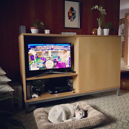 Melody is napping during the #PuppyBowl Kitty Halftime Show
