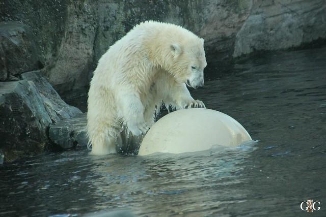 Besuch Zoo am Meer 29.12.201630