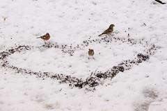 Herz für Vögel