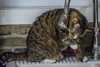 The Cat Who Drinks from a Tap | by Stephen Downes