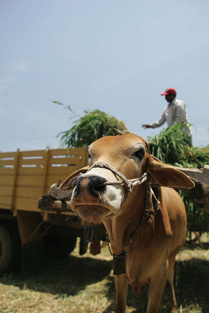 Making technologies available to smallholder mixed crop–livestock farmers