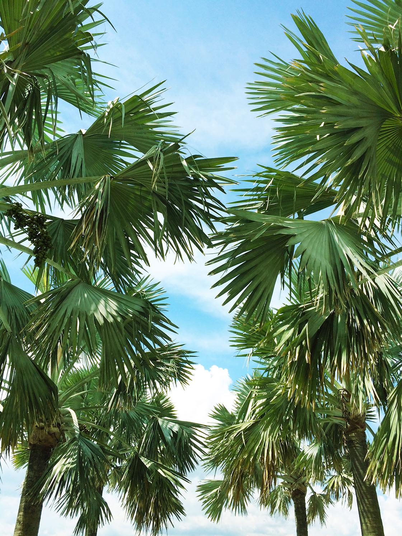 palm trees blog