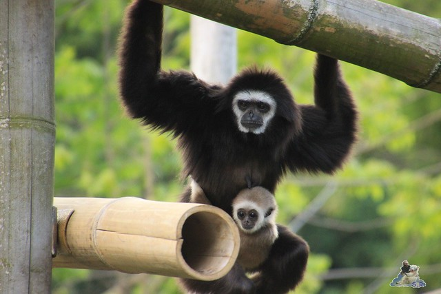 Tierpark Berlin 30.05.2015  168