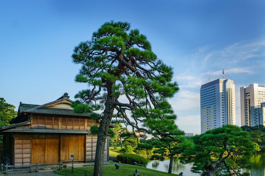 Pine of Hamarikyu Gardens | Clemens Riemenschneider | Flickr