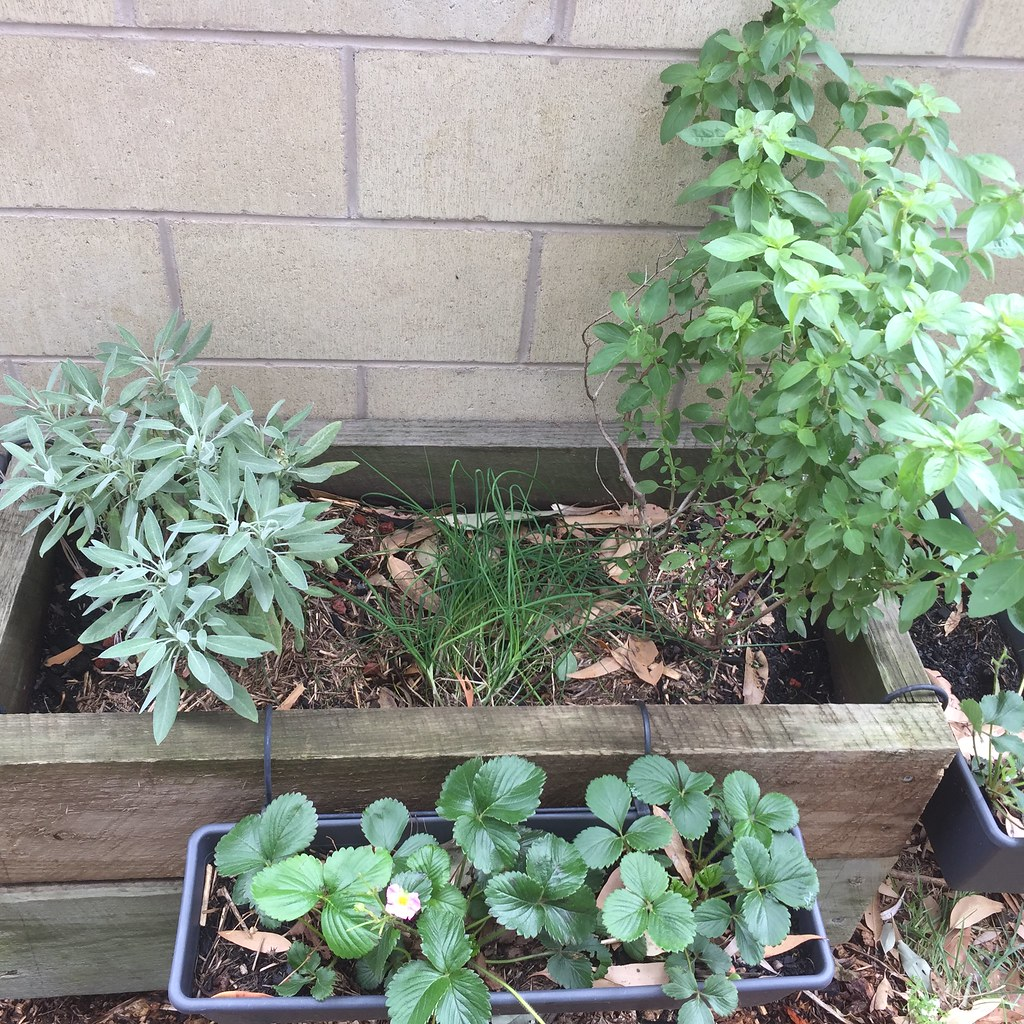 basil, chives and sage thriving along in a planter box, with strawberry plants in hanging baskets off the front and sides
