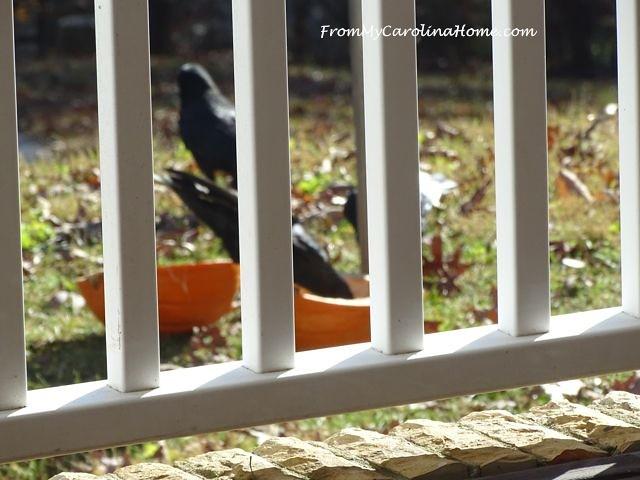 December Crows 4