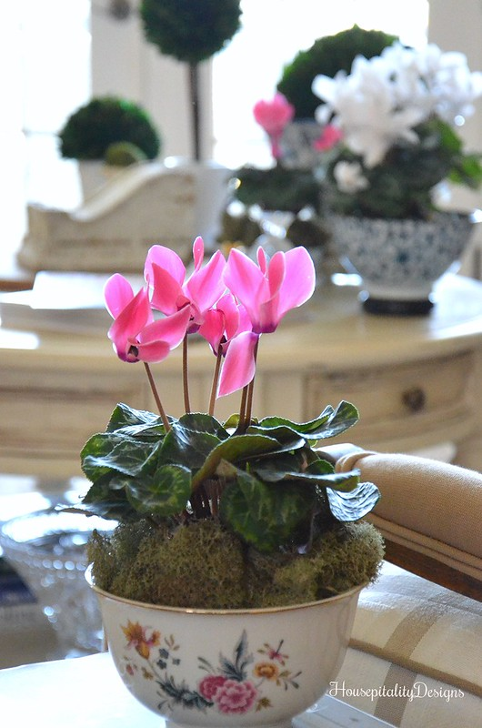 Pink Cyclamen-Avon Porcelain Bowl-Housepitality Designs