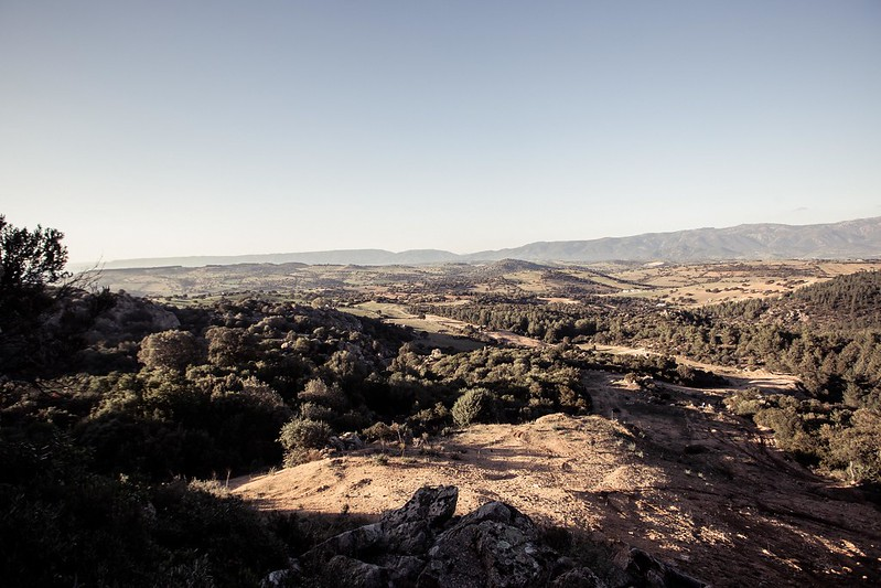 Sardegna Cane Pazzo