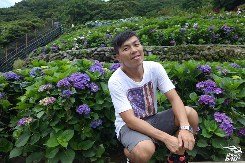 陽明山竹子湖繡球花11