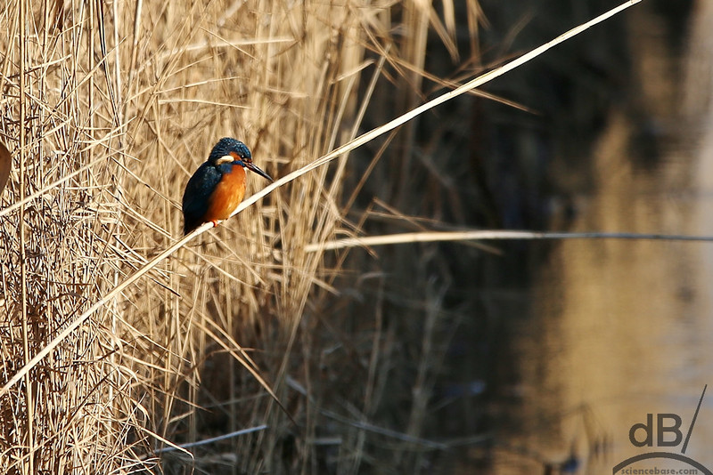 600mm Birds