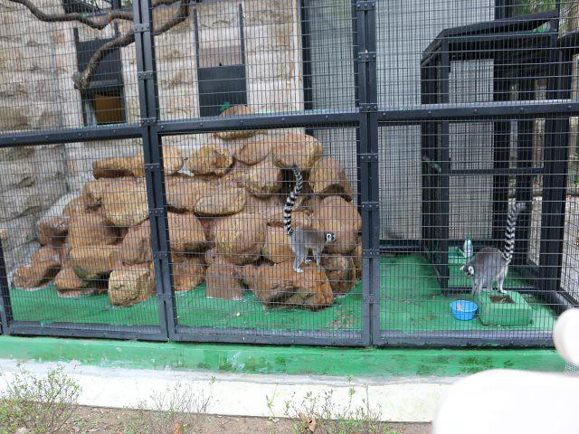 gradina zoologica si botanica obiective turistice gratuite Hong Kong 5