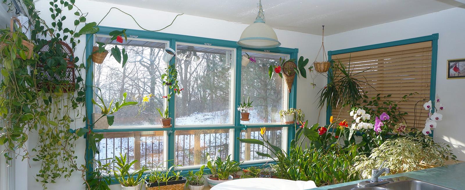 winter garden10