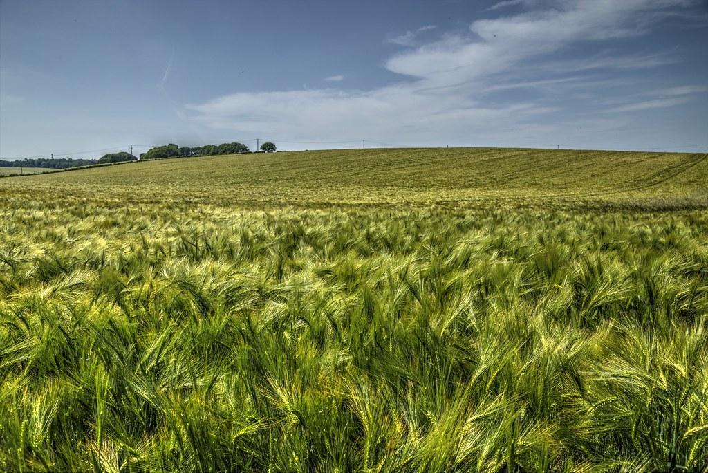 Grass Fields.