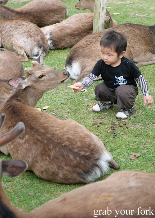 Child feeding the wild deer at Nara Park, Japan
