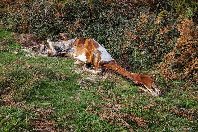 Caballo muerto cerca del Argandoita