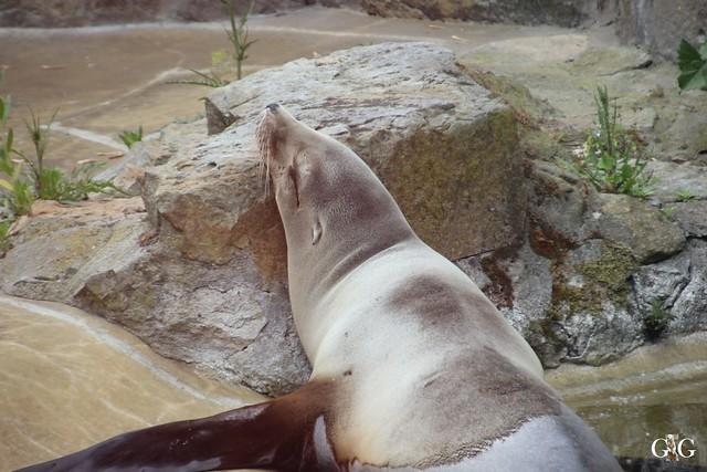 Besuch Zoo Berlin 31.05.201532