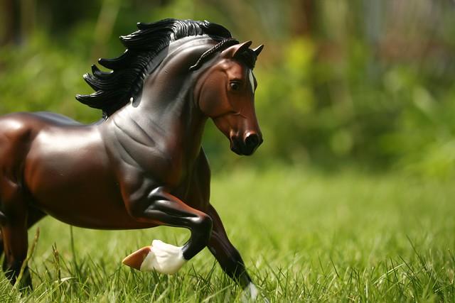 EA Fantastic Mr Copperfox - Welsh Cob - stallion - OF - EG5