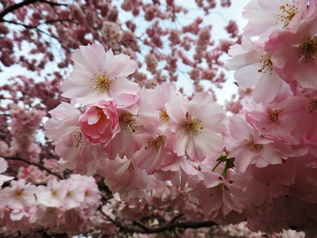 photo_essay_celebrate_spring_zagreb_park2