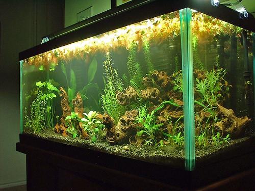 Finnex Planted Tank Light