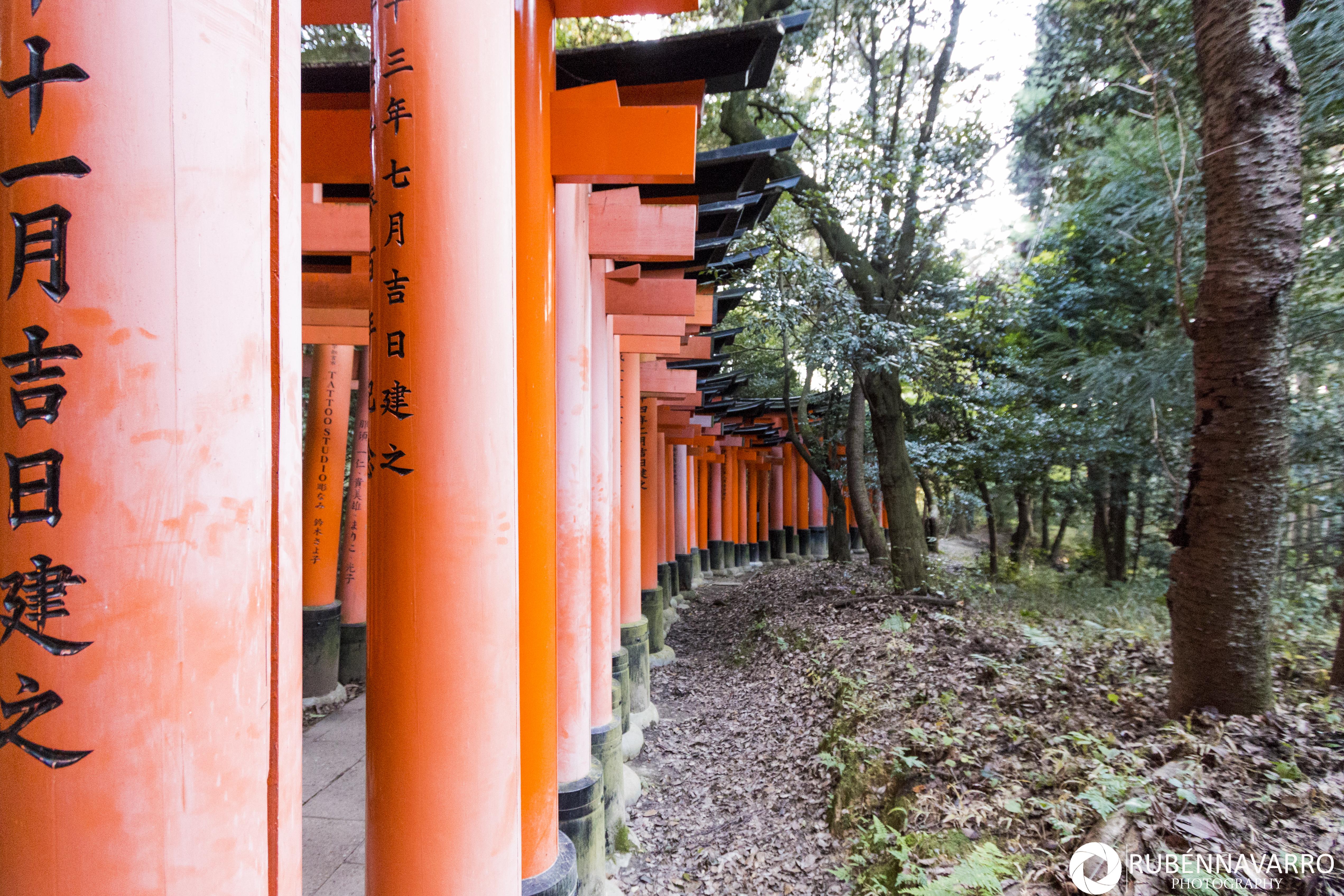 Visitar el Fushimi Inari Taisha Japón