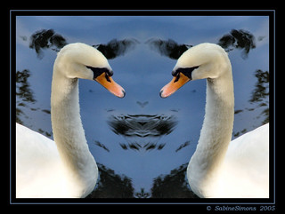 swans | by freemysoul