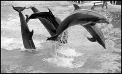 Sea World in B&W | by Michael Casey